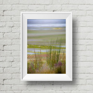 Utah Photography – Salt Lake Prairie Grass